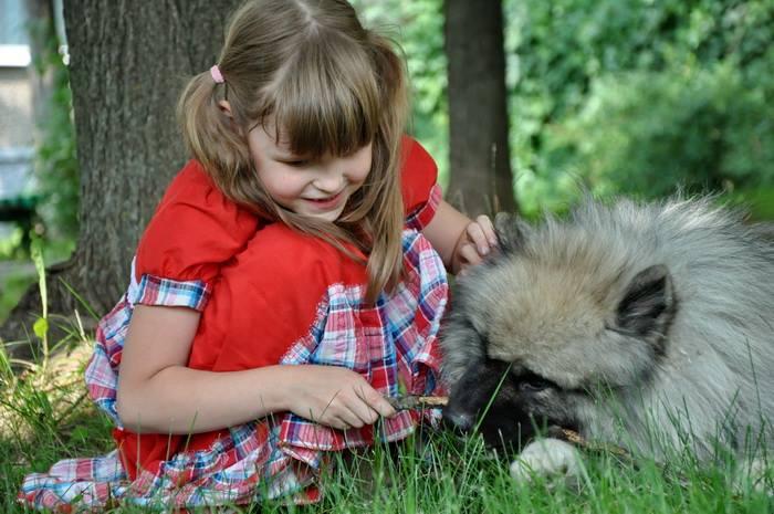 Кеесхонд и ребенок фото