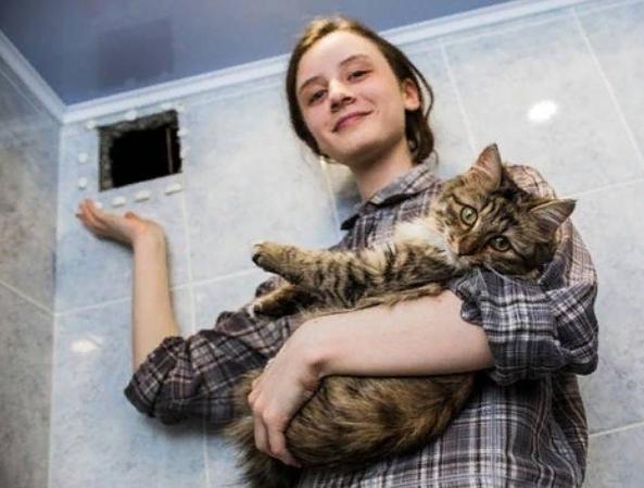 кошка, домашнее животное, дикое животное