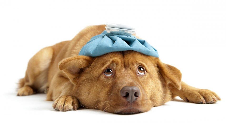 Свобода от травм и болезней собаки фото