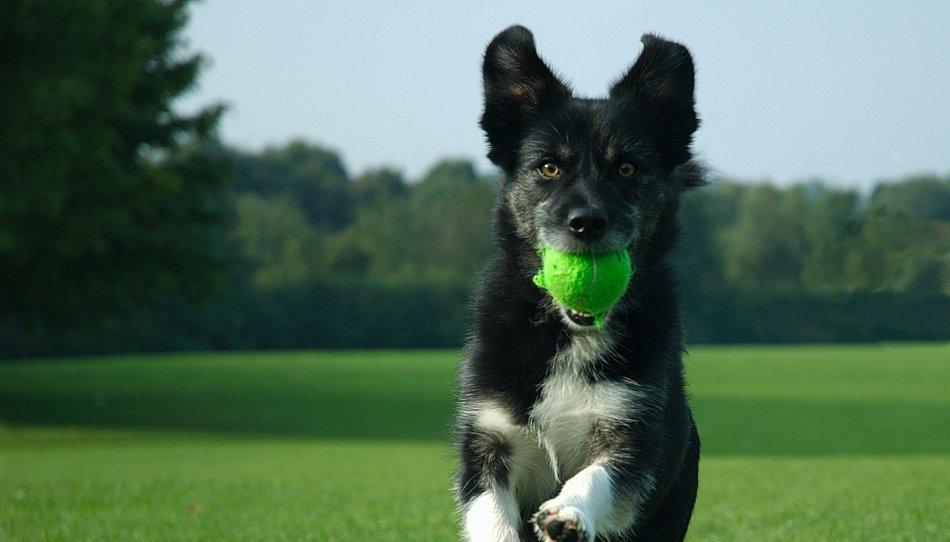 Игра с собакой фото