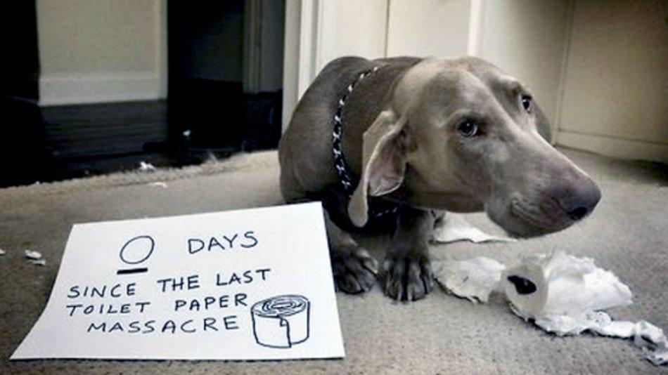 Нарушение 5 свобод ведет к проблемам поведения собаки фото