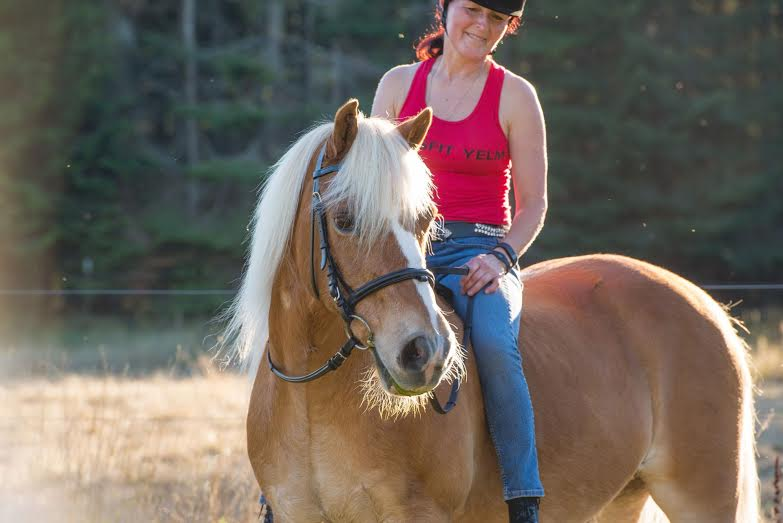Человек на лошади породы хафлингер фото