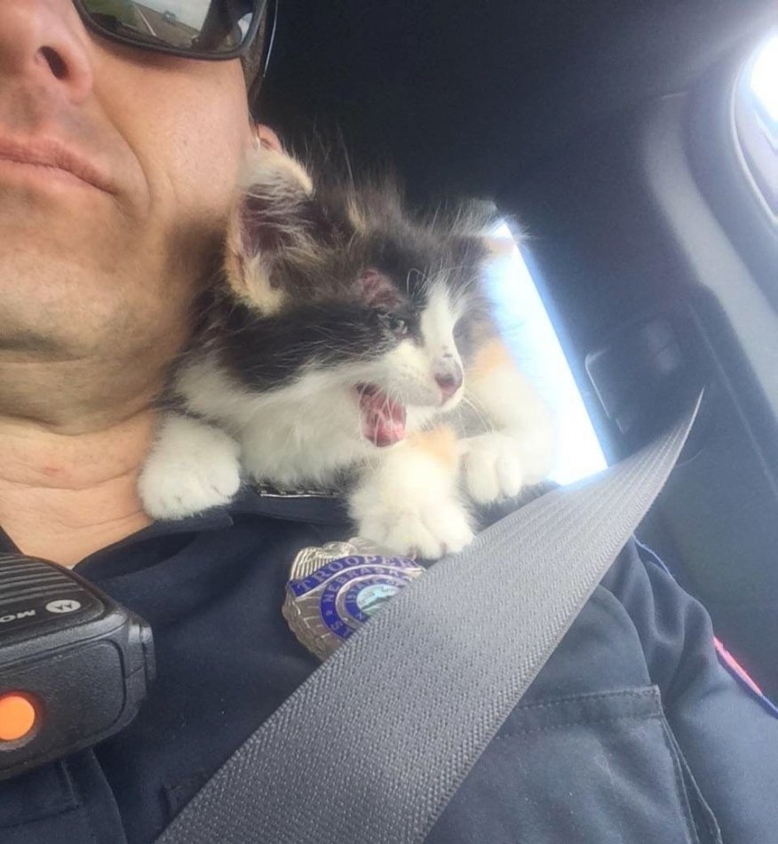 кот,котенок,требуется помощь,полицейский