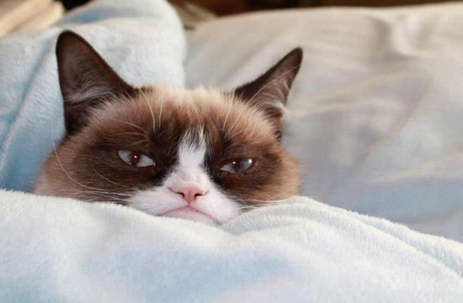 Кот после кастрации фото