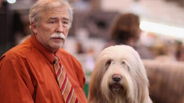 Собака похожа на хозяина фото