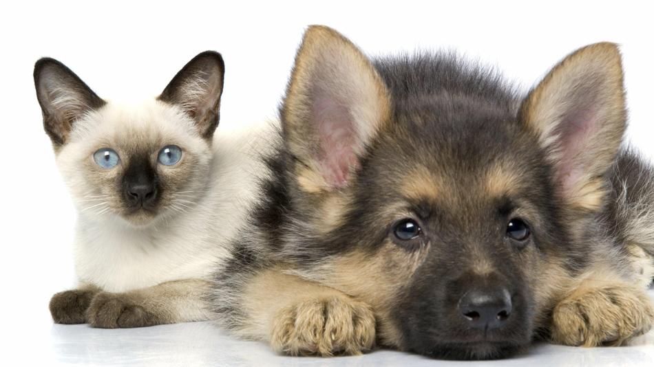 кошка и собака фото