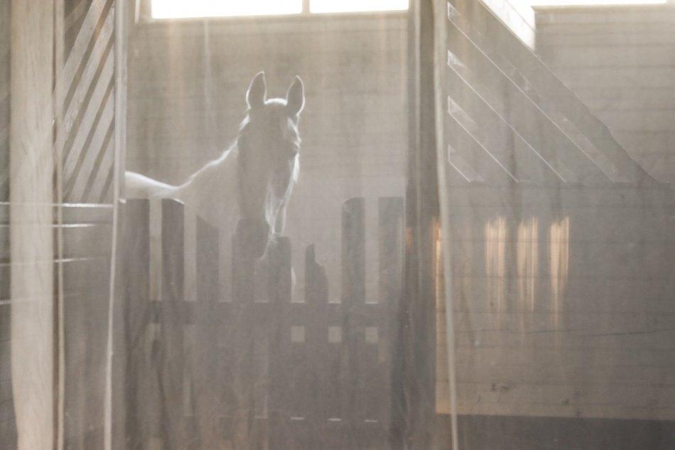 Серая лошадь за забором фото