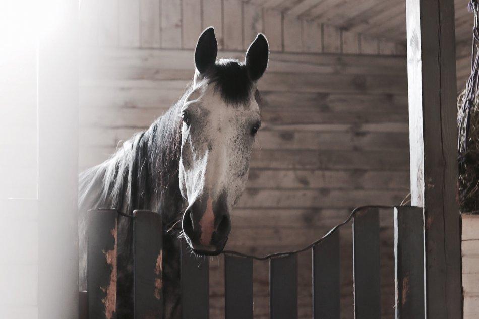 Темно-серая лошадь за забором фото