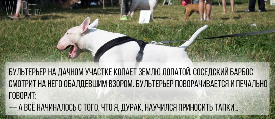 смешная история про собаку