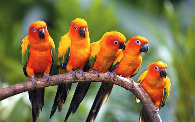 Попугаи аратинга фото