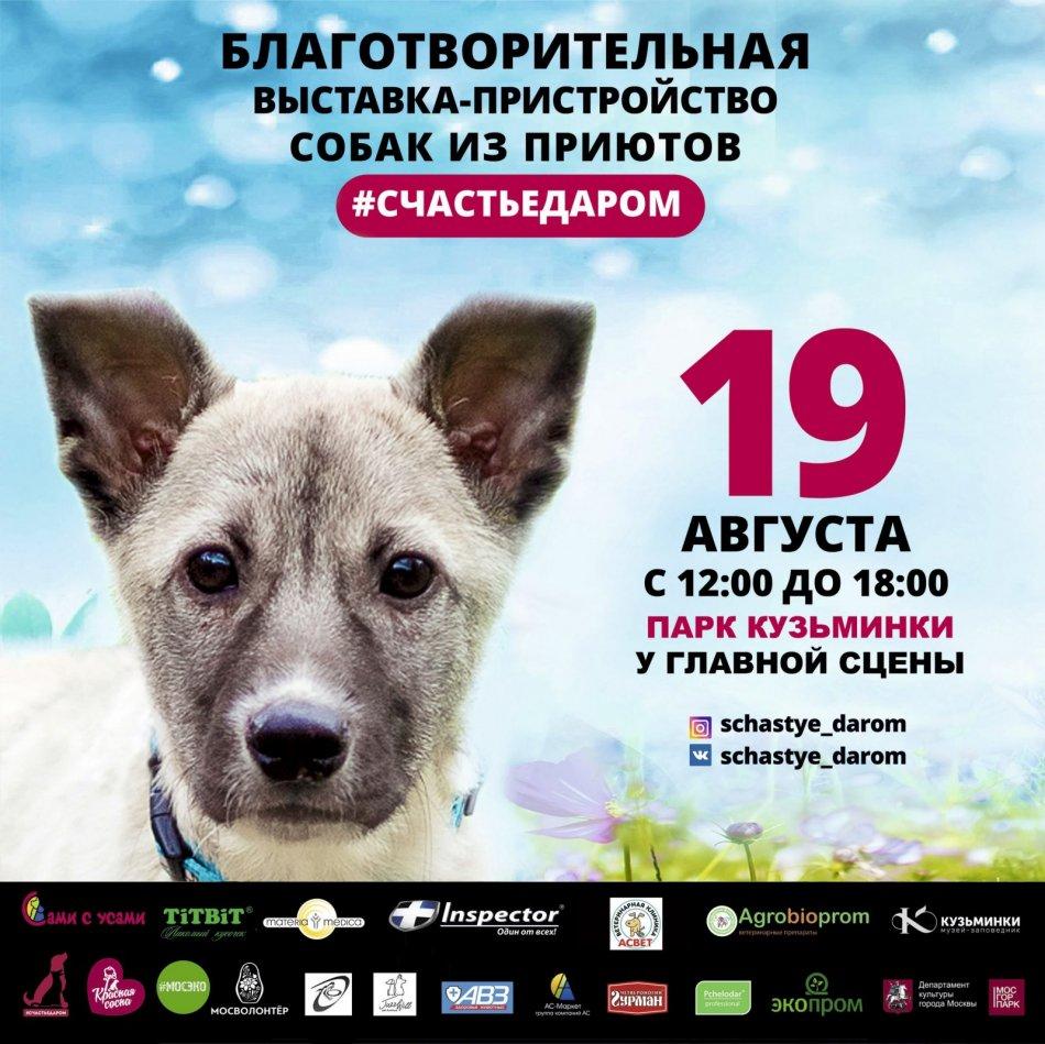 собака,акция,благотворительность