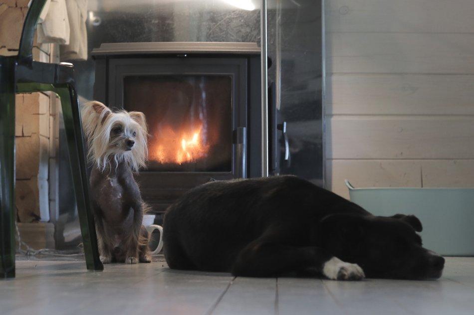 Собаки возле камина фото