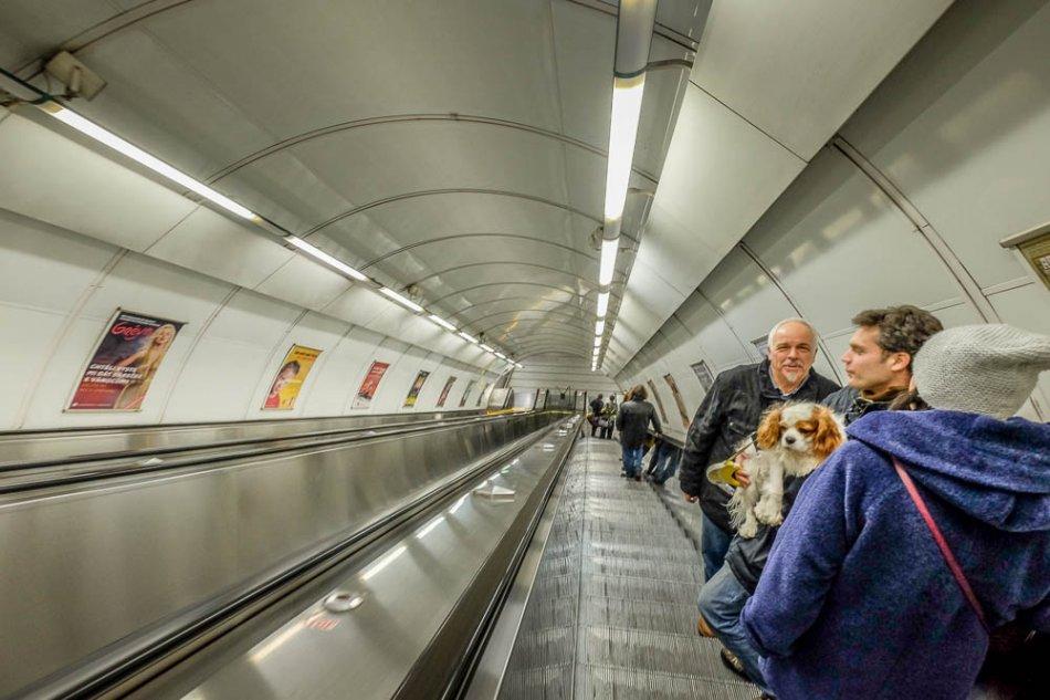Собака в метро в Праге фото