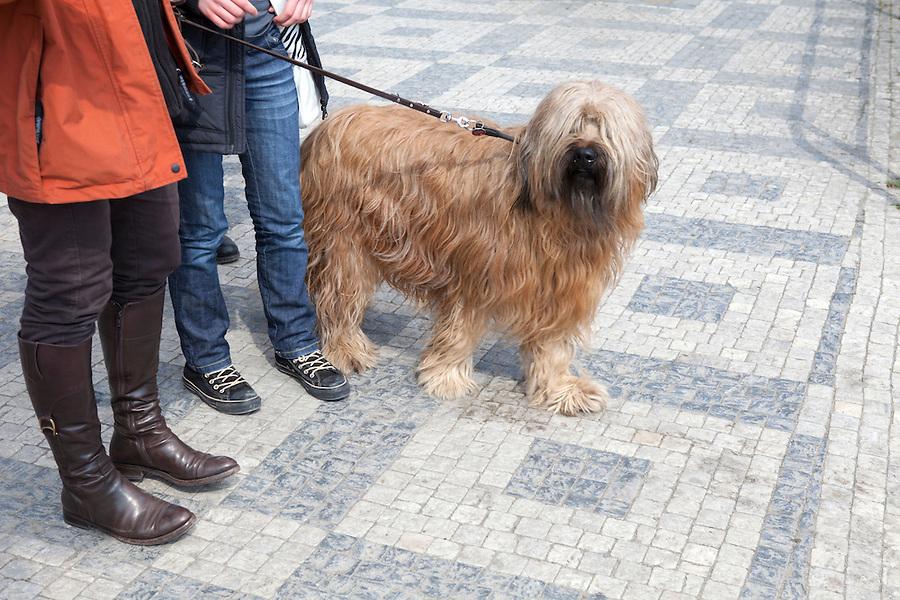 Собака на прогулке в Чехии фото