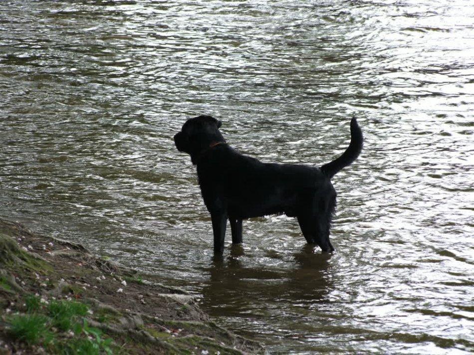 Собака в воде в Праге фото