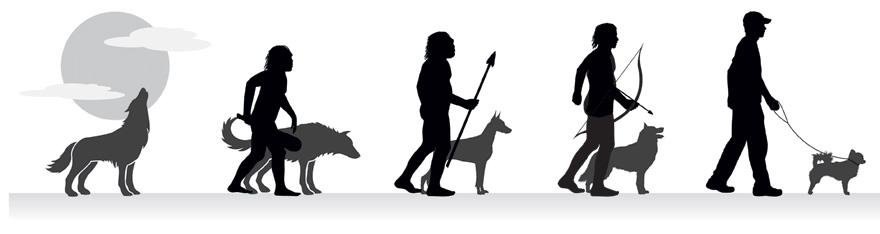Как собака приручила человека фото