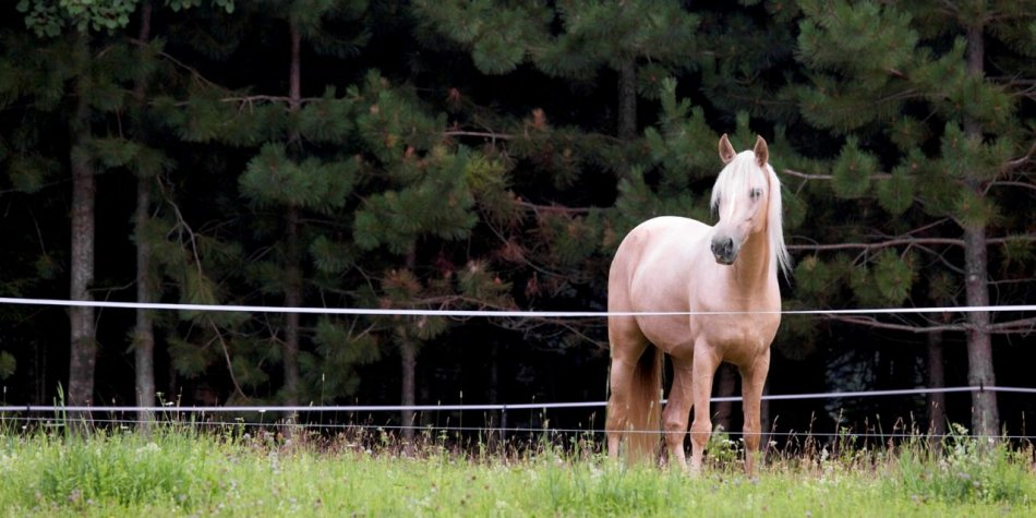 Лошадь в электропастухе фото