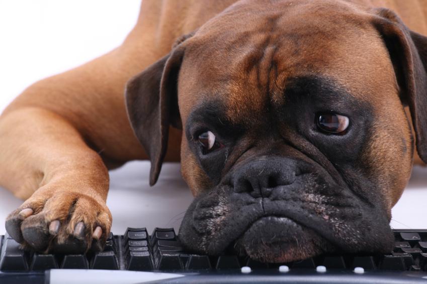 Коррекция проблемного поведения собак фото