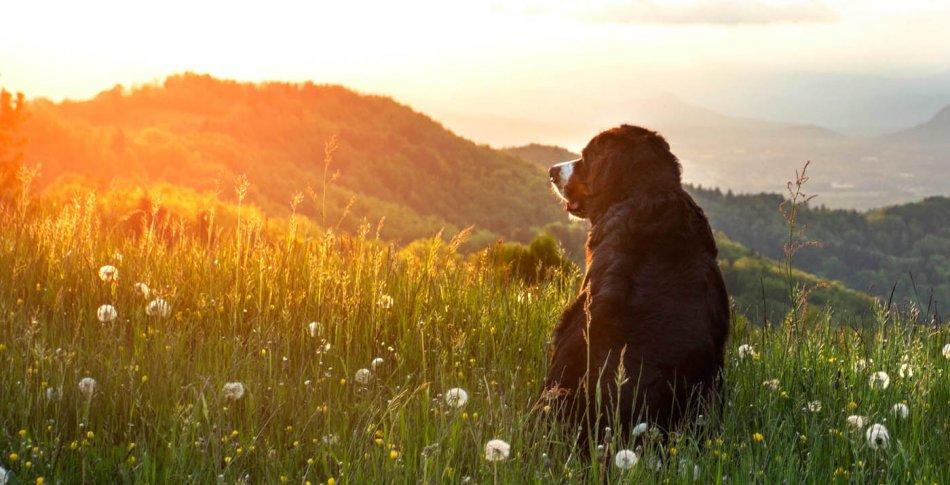 Собака в горах на закате фото