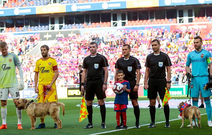 Собаки на футбольном поле фото
