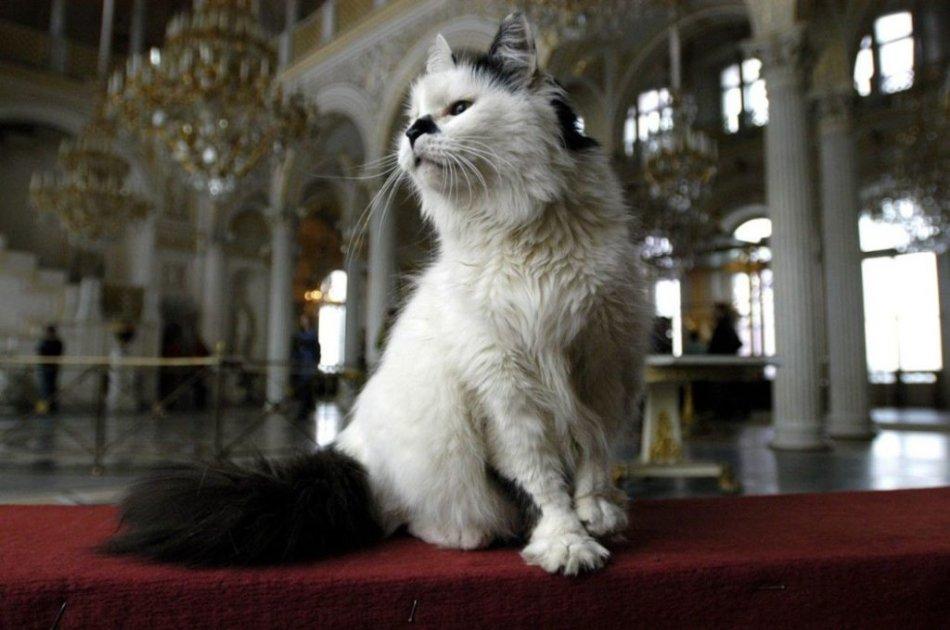 Кошка в Эрмитаже фото