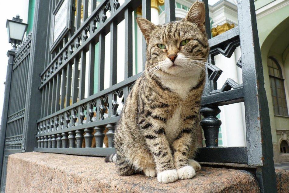 Кошки в Эрмитаже фото