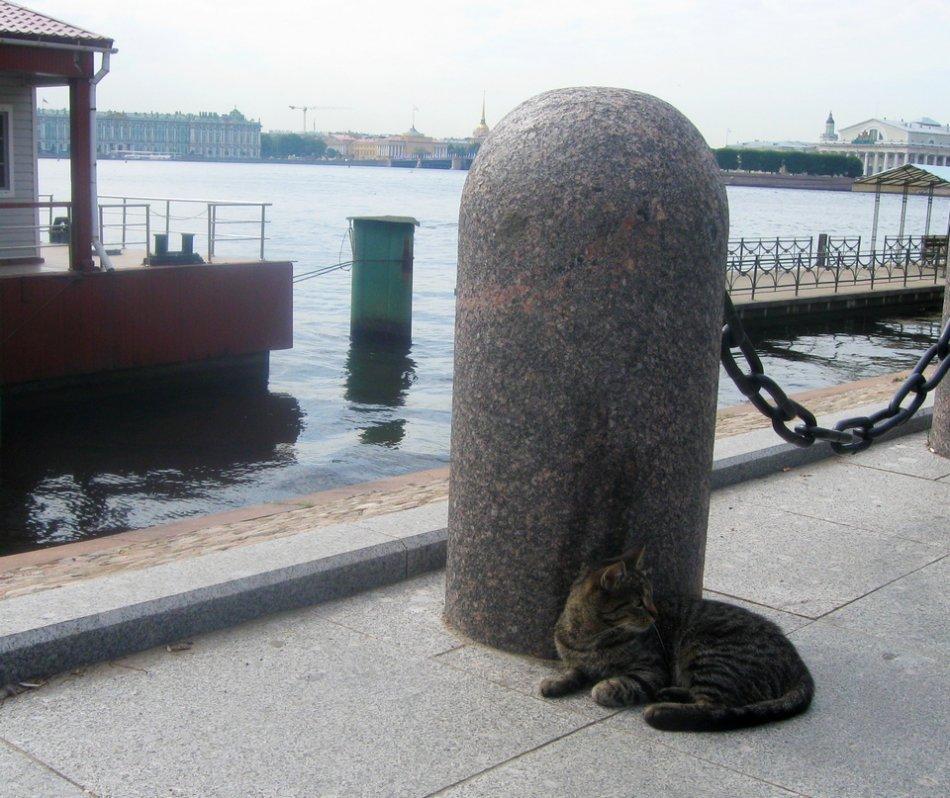 Кошка у Петропавловской крепости фото