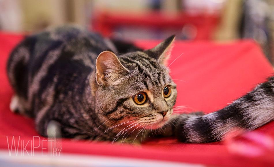 кот,кошка,питомец,домашние животное