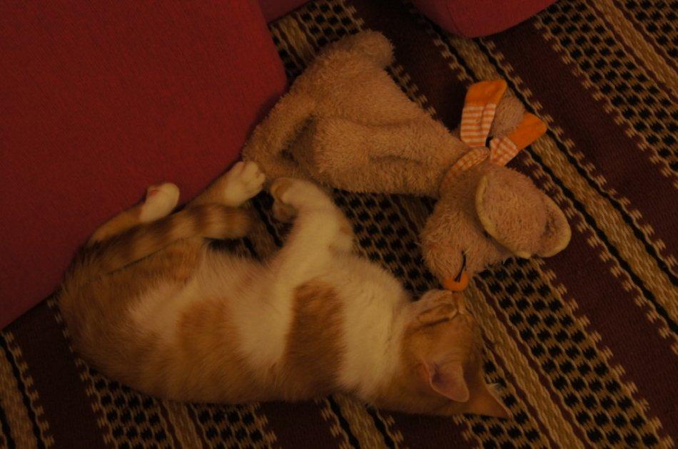 Рыжий котенок спит с игрушкой фото