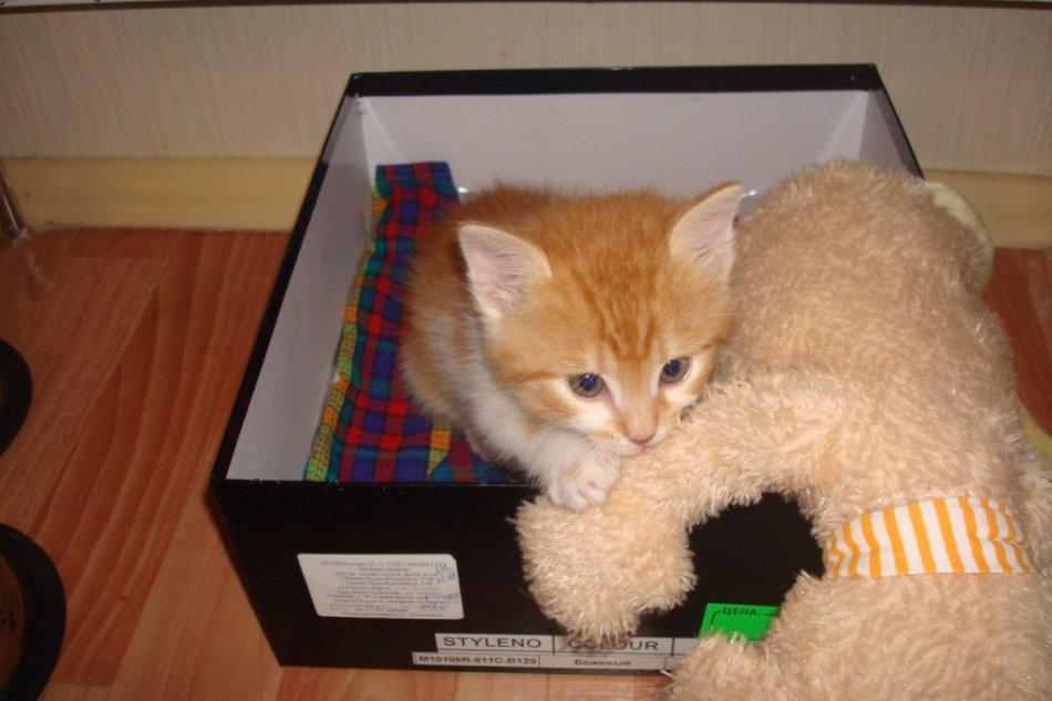 Рыжий котенок в коробке с игрушкой фото