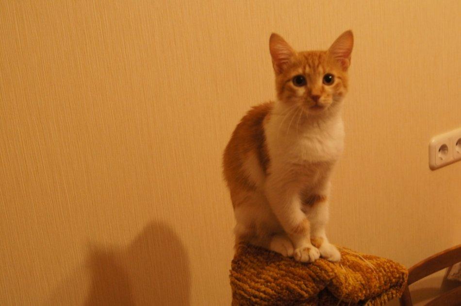 Бело-рыжий котенок сидит фото