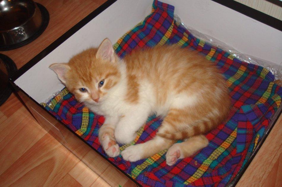Бело-рыжий котенок лежит в коробке фото