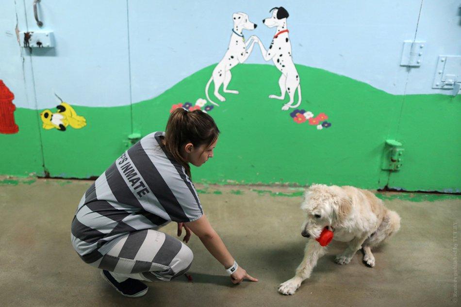 Заключенная обучает собаку фото