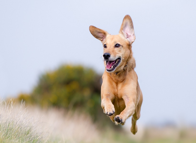 Картинки щенок бежит