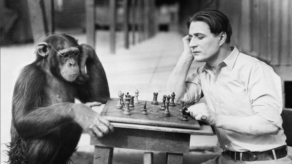 Человек и шимпанзе играют в шахматы фото