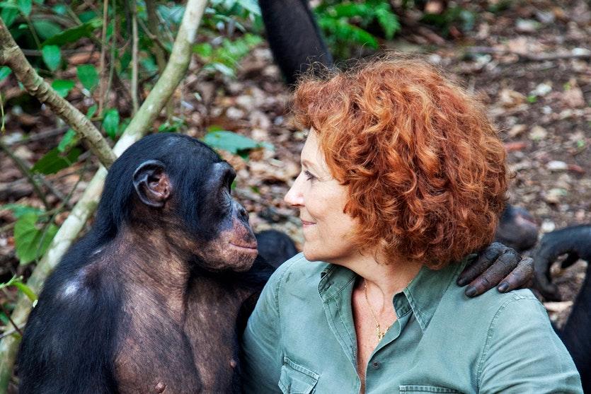 Человек и бонобо смотрят друг на друга фото