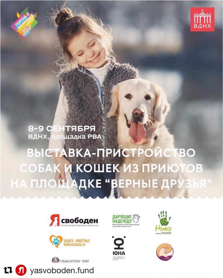 Выставка-пристройство собак и кошек