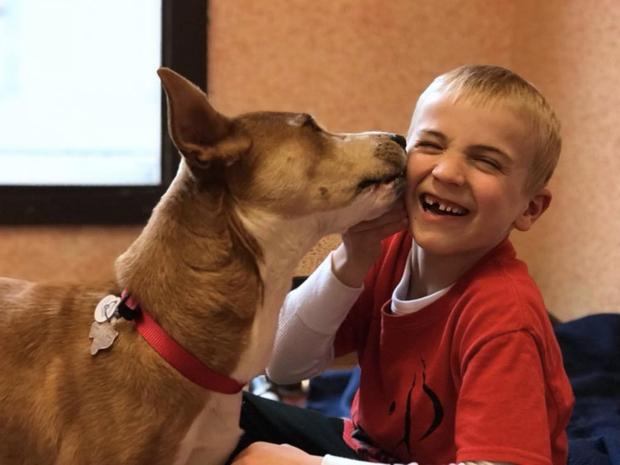 Мальчик и спасенная им собака фото