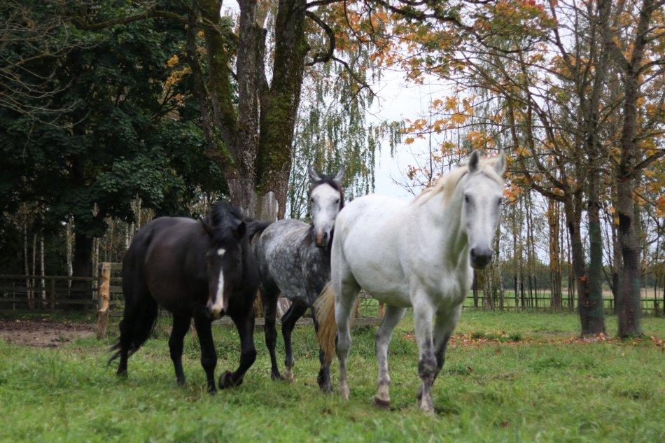 Три лошади бегут фото