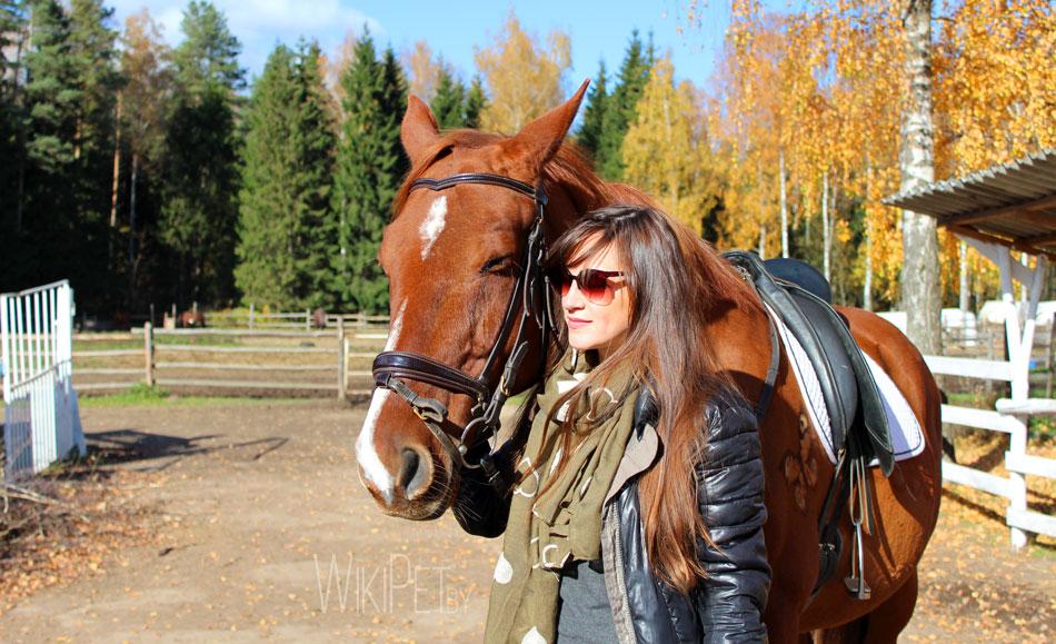 Рыжая лошадь и человек фото