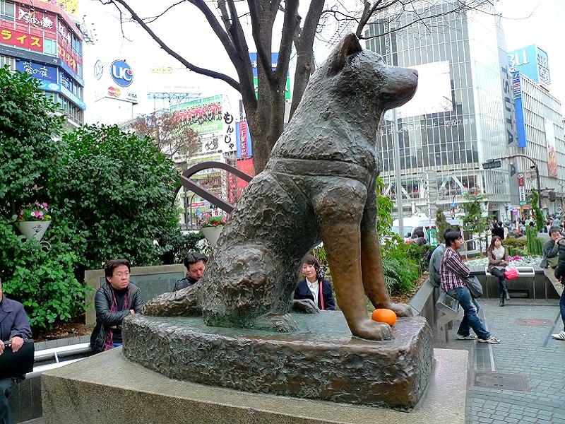 Памятник Хатико в Японии фото