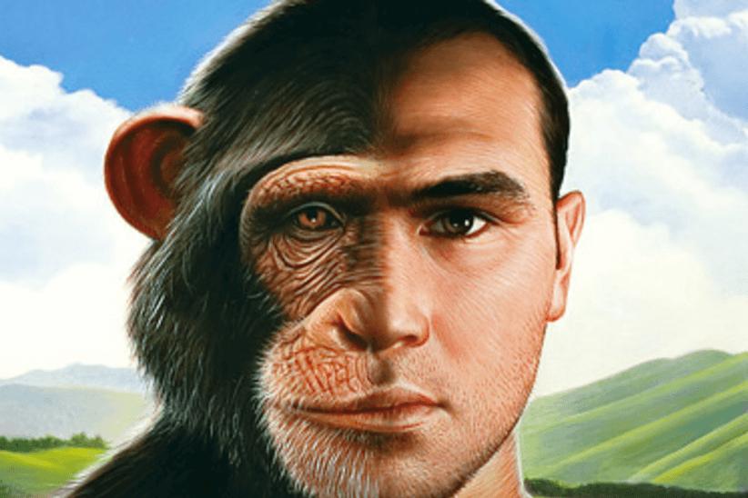 Отличия человека от животного фото