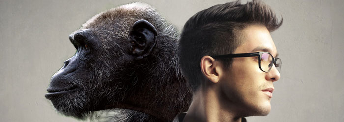 человек и обезьяна различия фото