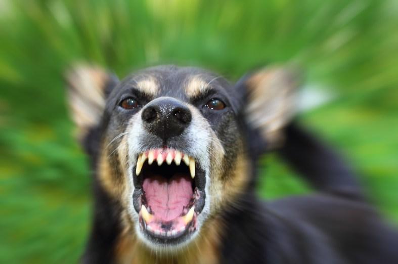 Агрессия собаки фото