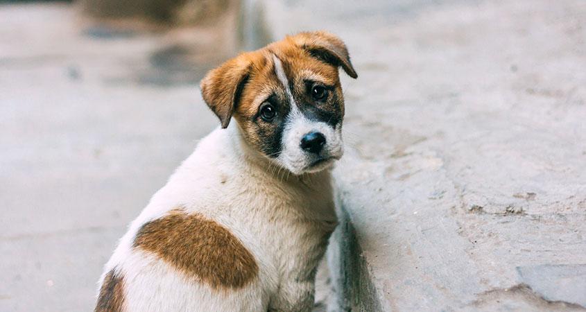 Бездомный щенок фото