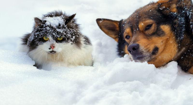Бездомные кот и собака зимой фото