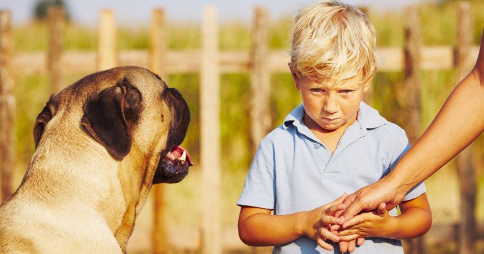Ребенок боится собак фото