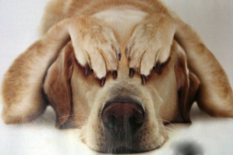 Собака закрыла глаза лапами фото