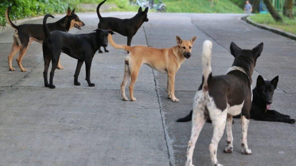 Стая бродячих собак фото