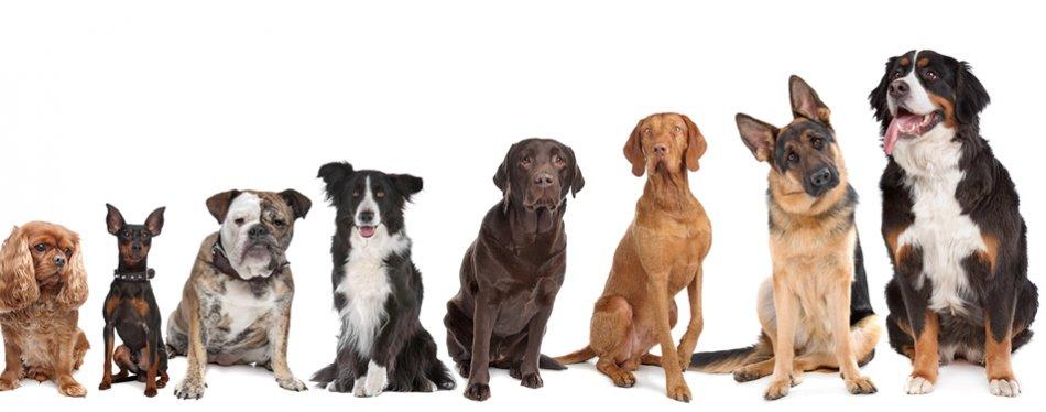Генетика собак фото